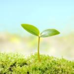 SDGs(持続可能な開発目標)と平和